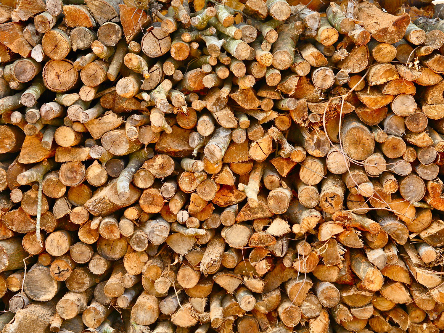 What is the best wood for smoking meat?