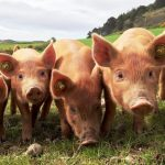 Moving towards a sustainable future of meat